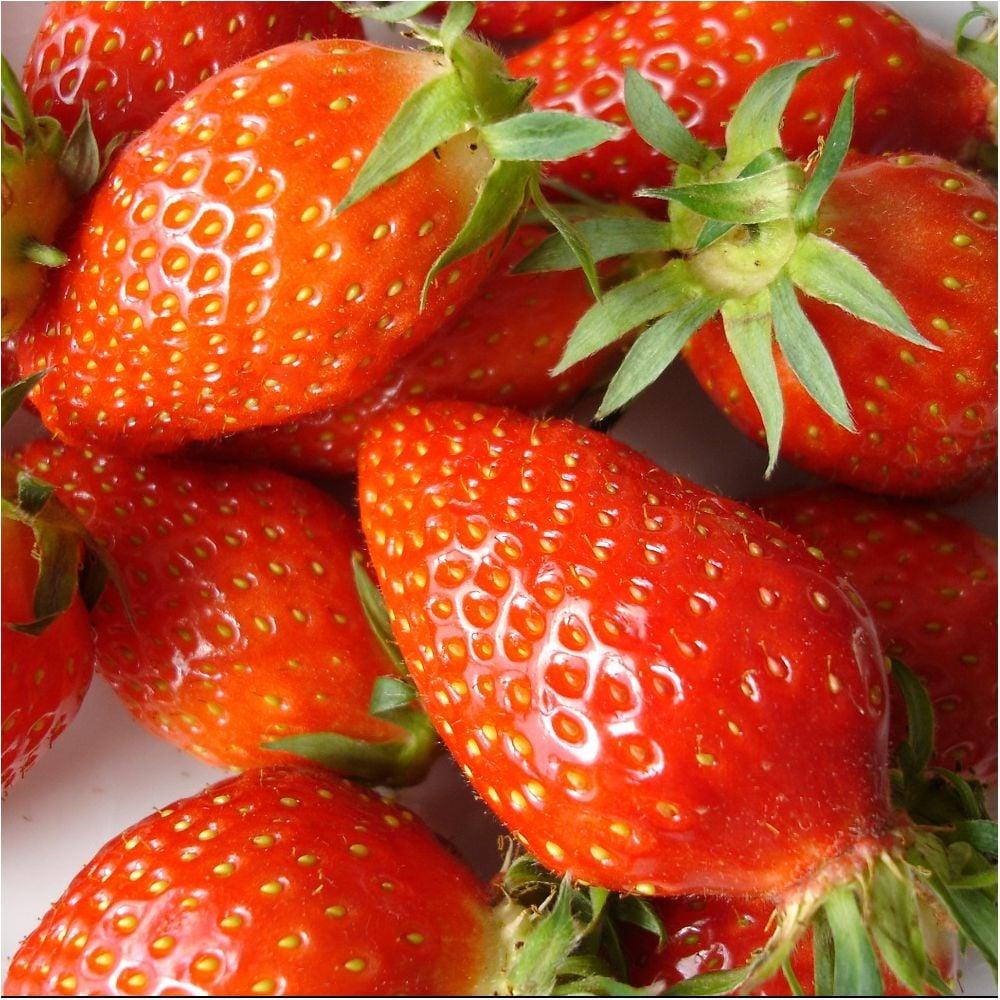 Récoltez vous-même vos fraises !